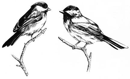 Birds-725480